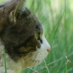 General Image - Cat in Grass2