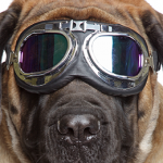 General Image - Dog Goggles