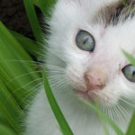 General Image - Kitten In Grass