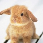 General Image - Bunny