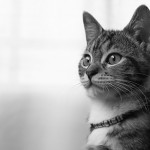 General Image - Cat BW
