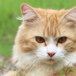 General Image - Cat Orange3