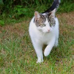 General Image - Cat Outside3