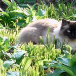 General Image - Cat in Grass3