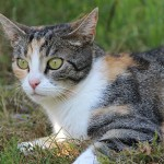 General Image - Cat in Grass5