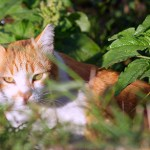 General Image - Cat in Grass7