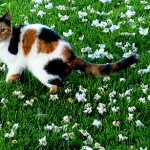 General Image - Cat in Grass8
