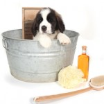 General Image - Dog in Bucket
