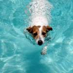 General Image - Dog in Pool
