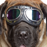 General Image - Dog with Goggles