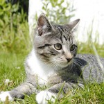 General Image - Kitten in Grass3
