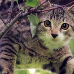 General Image - Kitten in tree