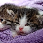 General Image - Kittens Sleeping