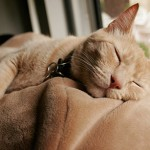 General Image - Sleeping Cat